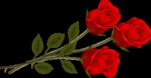 rozes1